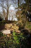Log pile in woodland Royalty Free Stock Photo