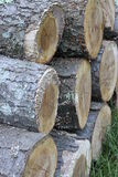 Log piled. Cut wood stacked in a backyard of a farm Stock Images