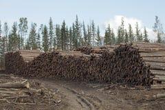 Log piles, Alberta, Canada Stock Image