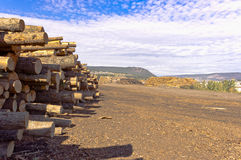 Log piles for mill Stock Photography