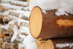 Log of pine-tree Stock Image