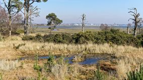 A Log in a Pond. At Arne in Dorset stock image