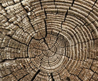 Log Profile. Old wooden log profile with circular lines making a pattern Royalty Free Stock Photos