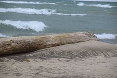 Log que negligencia o Lago Michigan Fotos de Stock Royalty Free
