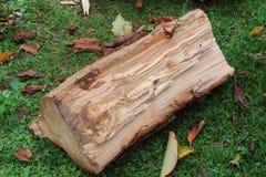 Log rachado Foto de Stock Royalty Free