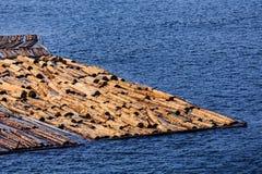 Log Raft on Blue stock images