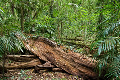 Log in the rain forest royalty free stock image
