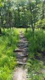 Log/ramo que caminha o trajeto Fotografia de Stock Royalty Free