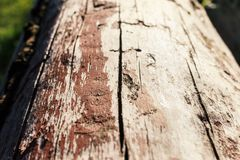 Log with remnants of brown paint Royalty Free Stock Photography