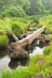 Log rests in a creek with a bridge. An old tree trunk lays in a small river with a bridge upstream Stock Photo