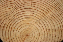 Log Rings. The end of a Pine Tree log with rings Stock Photo