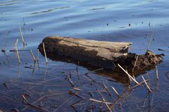 Log in river Royalty Free Stock Photography