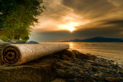 Log on Rocky Shore With Warm Sunset Stock Image