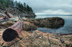 Log On Rocky Shoreline Stock Photography