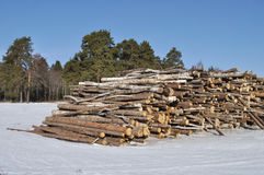 Log's stack at forest edge in winter stock image