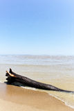 A log on sandy beach Stock Images