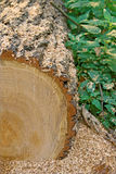 Log, sawdust, forest Stock Photography