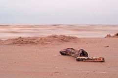 Log on seashore Stock Photography