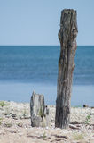 Log on the seashore Royalty Free Stock Image