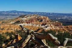 Log sec au-dessus de canyon de Bryce, Utah photos libres de droits