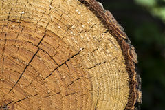 Log Section Stock Photography