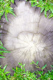 Log section on green grass. Royalty Free Stock Photo