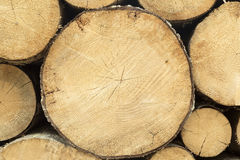 Log Section Royalty Free Stock Photo