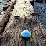 Log and shell Stock Photos