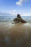 Log on the shore of the beach Stock Photos