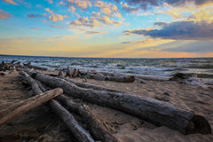 Log on the shore Royalty Free Stock Photo