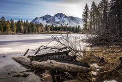 Log on Shoreline, Lassen National Park Stock Photos
