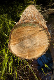 Log Stock Photography