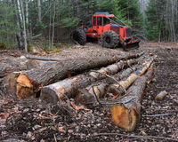 Log skidder and logs stock photo