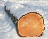 Log on the snow. Dry log on the snow in winter time Stock Photos