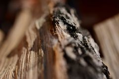 Log Royalty Free Stock Images