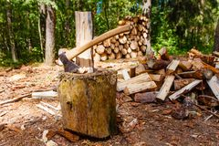 Log splitting in pine forest. Firewood pile royalty free stock photo