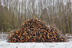 Log stack on forest Stock Photo