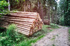Log stacks along forest road. Log stacks along the conifer  forest road Royalty Free Stock Photography