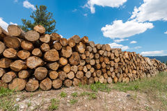 Log stacks in the forest Stock Image