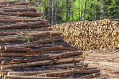 Log Stacks Stock Photos