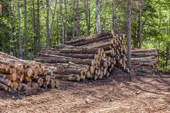 Log Stacks Stock Image