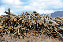 Log Stock Pile. Pile of Fresh Cut Timber at a Sawmill Stock Image