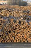 Log storage lumber mill Wood Waiting Export. An upright view of felled tree trunks stacked and stored outside in the yard of a lumber mill Royalty Free Stock Photos