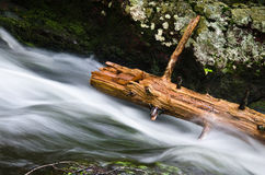 Log Stripped Bare Royalty Free Stock Image