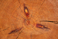 Log structure Royalty Free Stock Photos