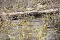 Log in a Swamp stock photos