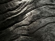 Log texture dark tone art Stock Images