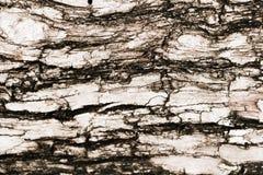 Log texture Royalty Free Stock Photo