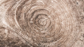 Log texture Stock Photos