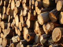 Log tree background Stock Photos